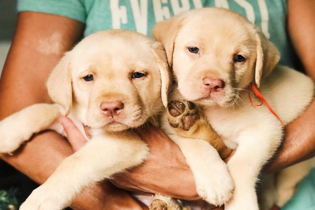 cachorros de raza
