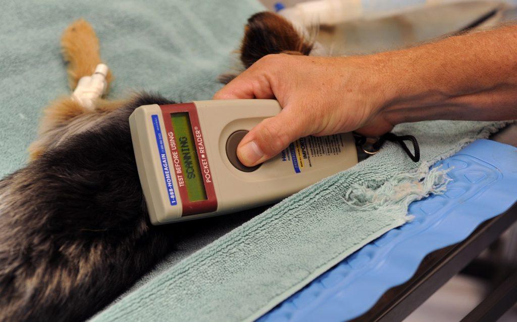 lectura de microchip en un perro